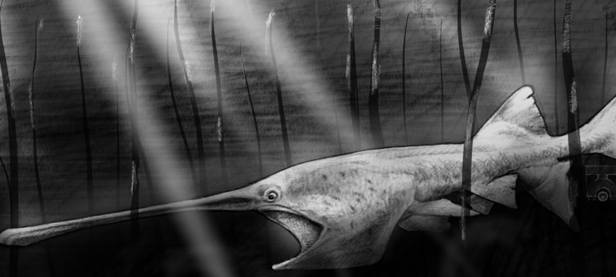 The Paddlefish Has a Real Weird Face.